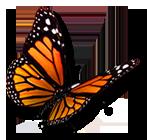 Healthclub OpenAir - Vlinder